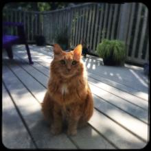 Sunny & His Deck